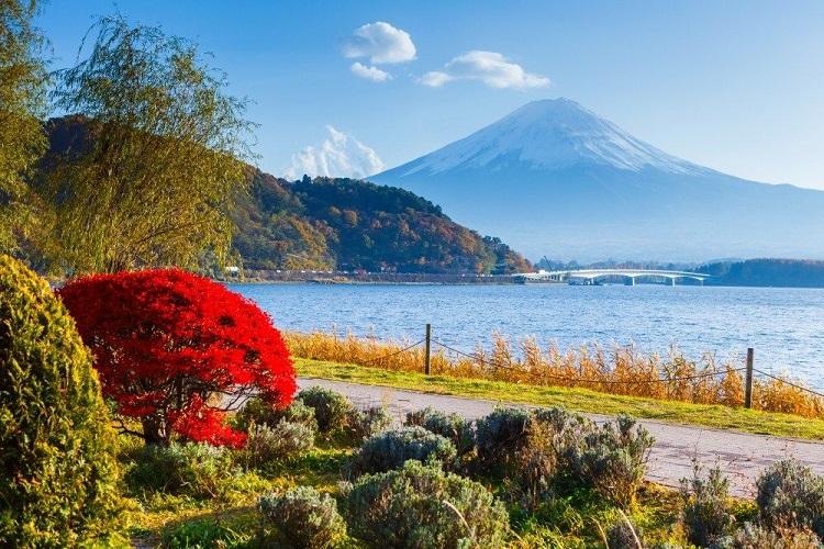Pemandangan musim panas di Jepang, Sumber : tripjepang.co.id