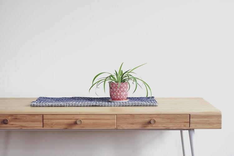 Spider Plants layak menjadi salah satu jenis tanaman hias indoor, foto: unsplash.com