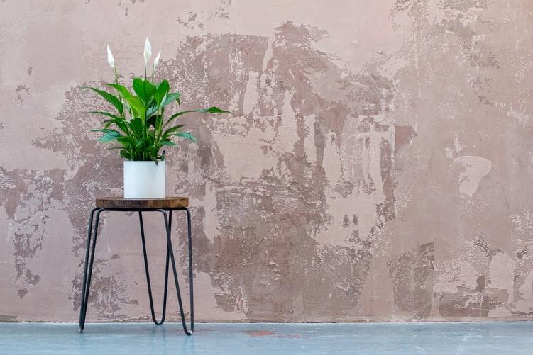 Peace Lily layak menjadi salah satu jenis tanaman hias indoor, foto: unsplash.com